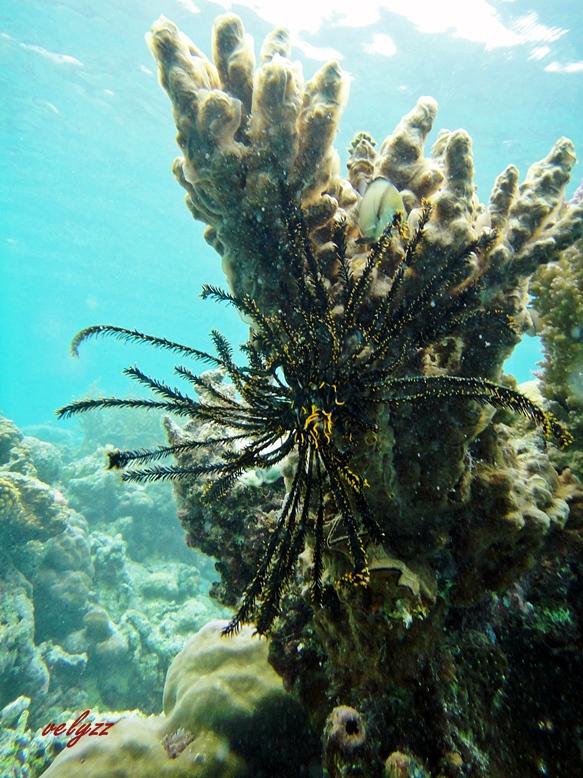 Corals in Wakatobi