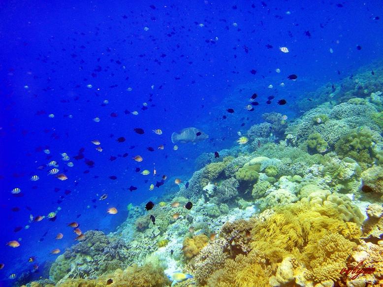 Marimabuk Tomia Island