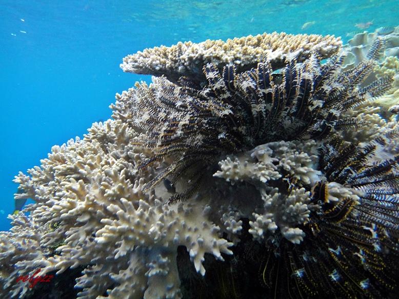 Marimabuk Tomia Island Wakatobi