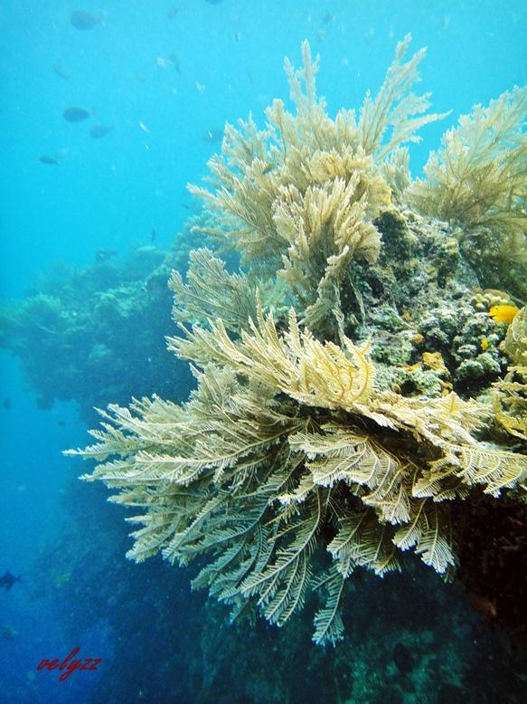 Terumbu Karang Wakatobi