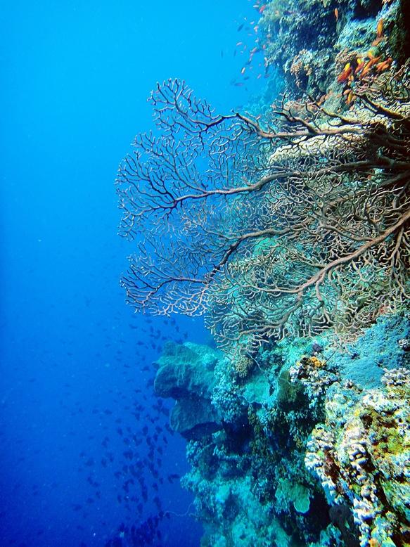 beautiful corals in wangi wangi