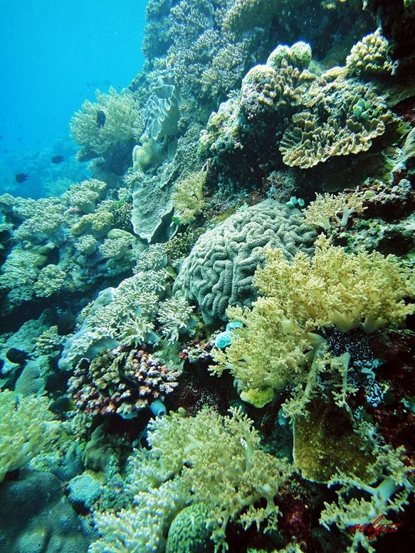 snorkeling in wangi wangi island wakatobi