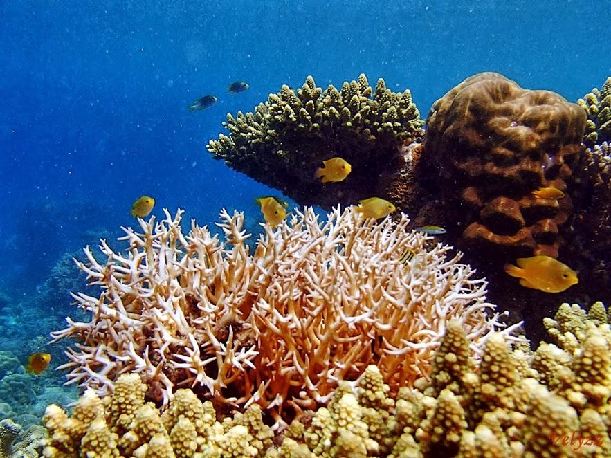 Coral Ora Beach Maluku