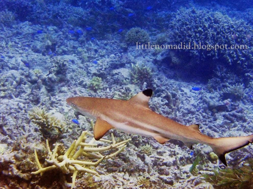 snorkeling in takabonerate