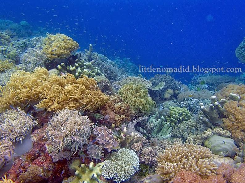 corals tarupa island