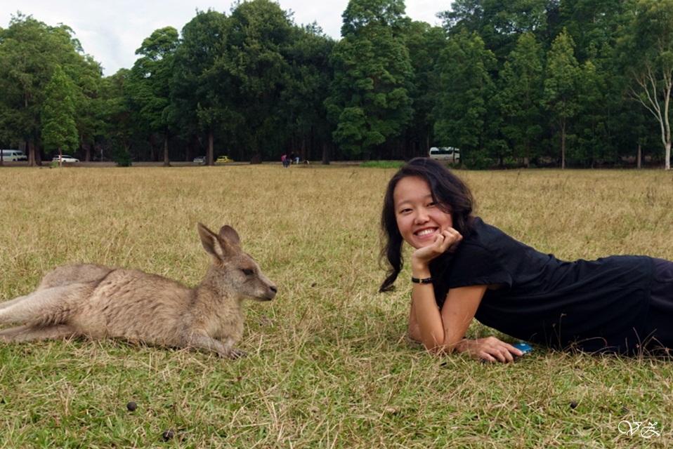 kangaroo morriset park sydney