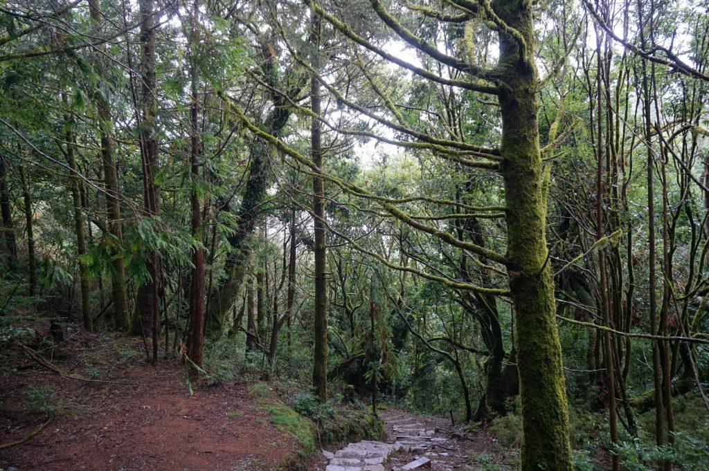 The vegetation xueshan taiwan