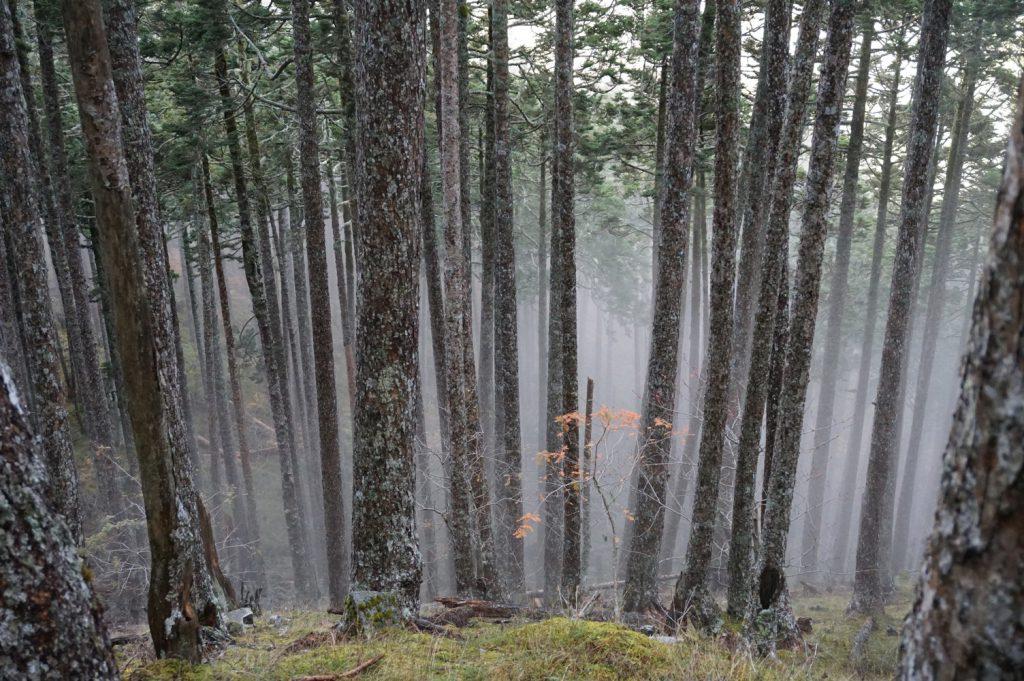 black forest xueshan taiwan