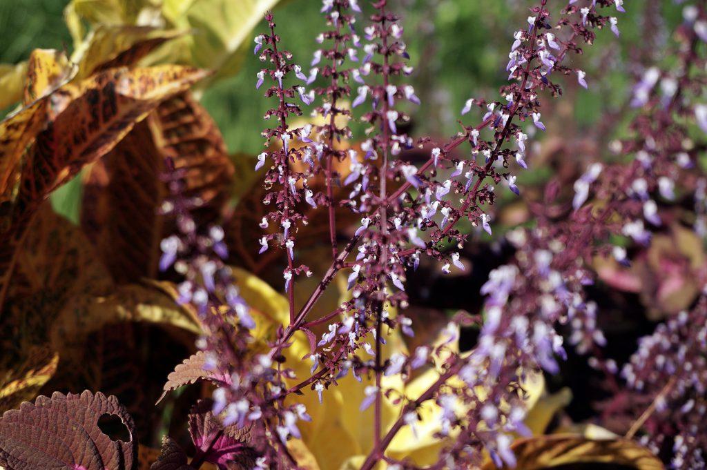 flowers around aling aling waterfall